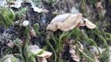 Beautiful Turkey Tail fungus.