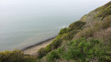 Such a steep incline to the beach. Coyote bush and poison oak everywhere.