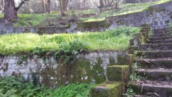 Mossy decay. I wonder what all these terraces had been used for when this was built...