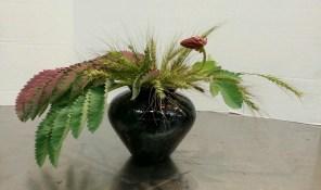 """Horizontal Freestyle"" Ikebana I made. Melianthus major and grass seedheads."
