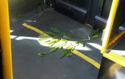 A stray fishtail palm leaf on a city bus. There's gotta be an interesting story behind that.
