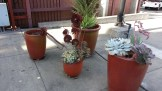 Colorful groupings of pots, with succulents, bring color to even the concrete areas within the facility.
