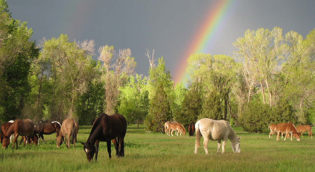 Rainbow over grazing horses and mules.