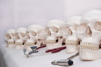 Anatomical skulls for borrowing.