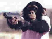Monkey cops! sacrifice their juice rewards to look at photographs of lady monkeys' butts.