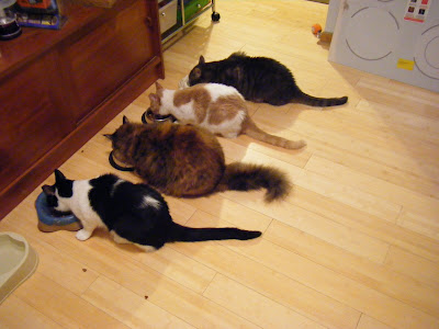 Zorro, Pia, Stanley, Sissy