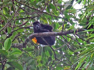Erica Ridley in Costa Rica: monkeys