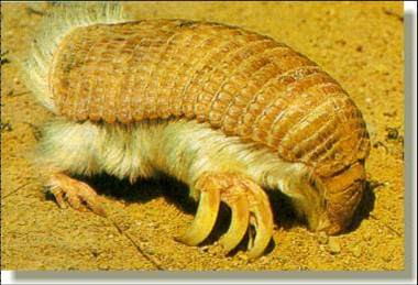 6/10 animales más feos del mundo...