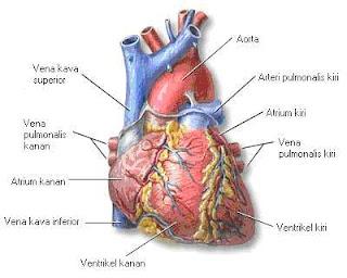 pemakana diet seharian penting dalam penjagaan jantung