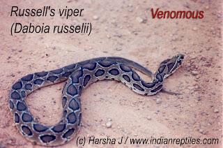 India's Big 4 snakes | PonnVandu