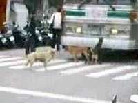 狗兒街�3P出現在台�街� ncut dog 3P