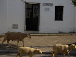 cabras madroño