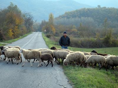 Under the shepherd's eye