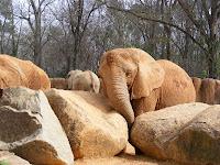 Elephants at Riverbanks Zoo