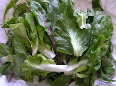 Blend of Escarole, Chicory, and Dandelion Greens
