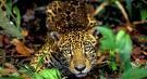 Internacionalização da Amazônia 4