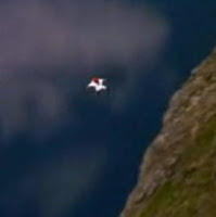 tiny human figure with webbing between legs and arms flies over the edge of a mountain