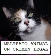 MALTRATO ANIMAL: UN CRIMEN LEGAL