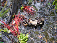 Congaree National Park Dorovan Muck mud
