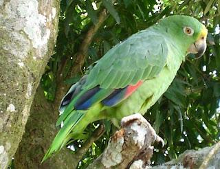 Resultado de imagen para periquitos en parque central de alajuela