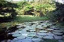 Internacionalização da Amazônia 6