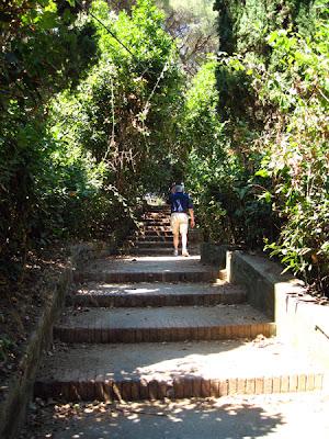 Steps into a grove