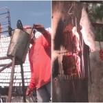 世界仰天グルメ!太陽光で20年間チキンを焼き続ける究極のエコ料理人