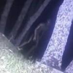 宇宙人研究家が絶賛!南米で「森のエイリアン」を警察が動画撮影成功