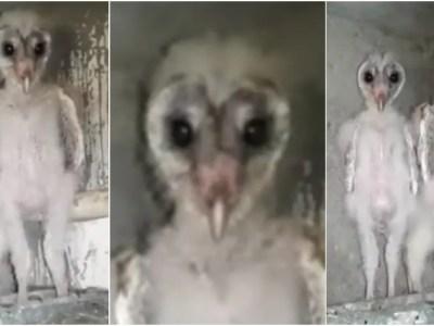 本当に鳥人間は存在した