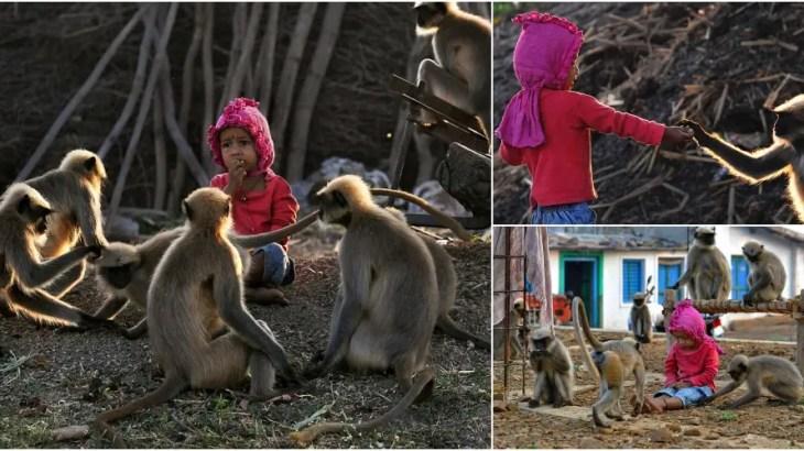 サル軍団が毎日会いに来るインドの2歳児は猿語を喋るのか?