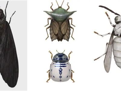 スターウォーズキャラを昆虫化