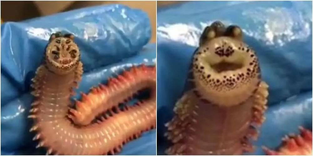 謎の深海生物が笑顔でご機嫌