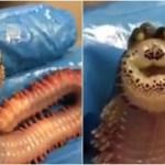 謎のキモカワ深海生物が100点スマイルで超ご機嫌だぜ!!!!
