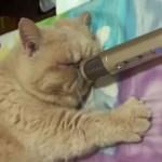 ネコのイビキを録音成功