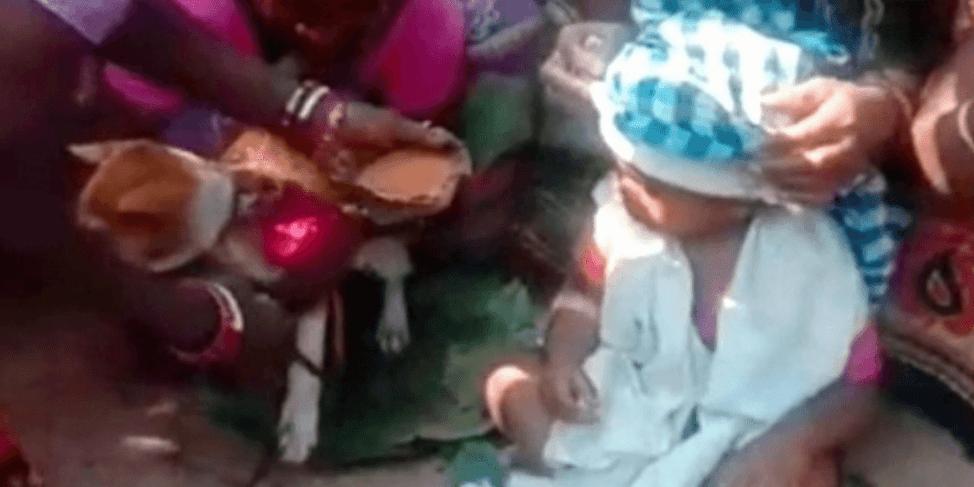 幼い子供が犬と結婚する除霊婚