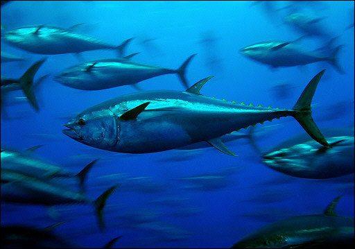 Protégeons les océans !