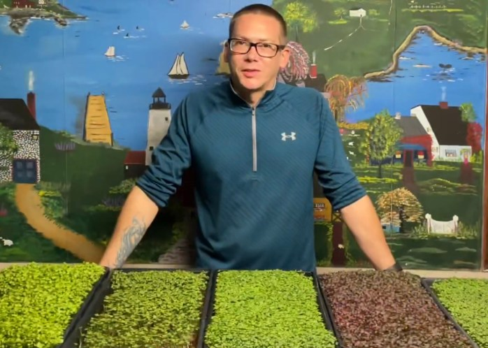 Distinguish your plate with mustard microgreens