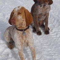 Bosco Ragar (brown) and friend