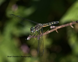 Dragonfly from July