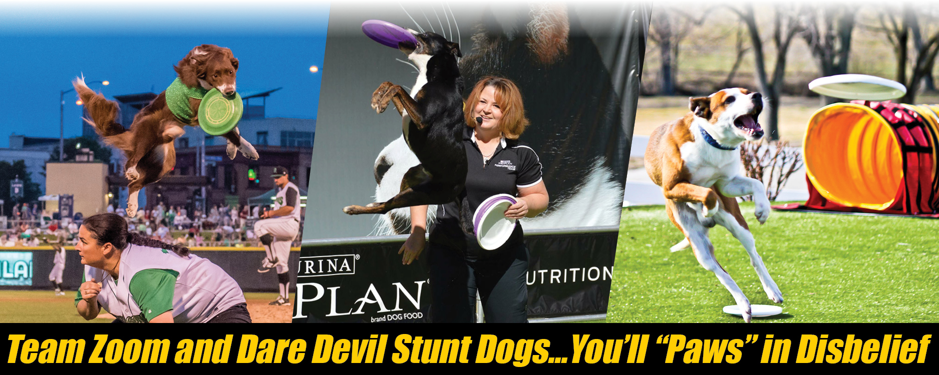 Stunt Dogs Header