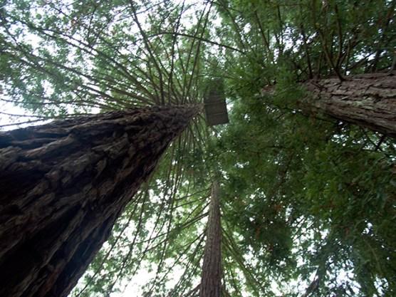 treesit1_11-7-07