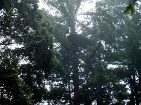 treesit2_11-7-07