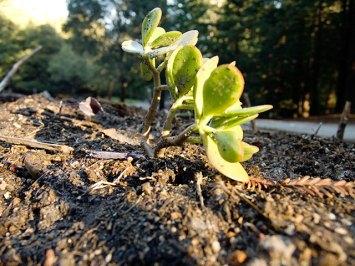 succulent_12-25-07