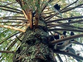 treesitters_1-12-08