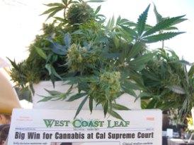west-coast-leaf_4-18-10