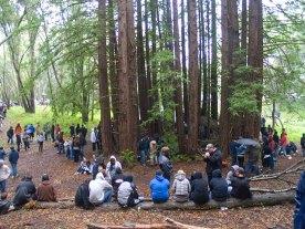 redwood-rings_4-20-11