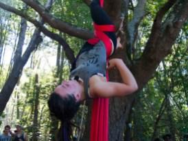 Upside-Down in Tree