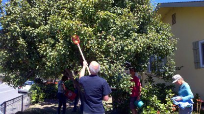 santa-cruz-fruit-tree-project_1_8-26-12