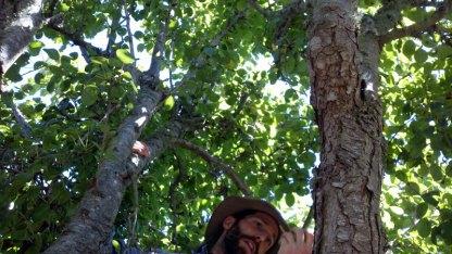 santa-cruz-fruit-tree-project_3_8-26-12