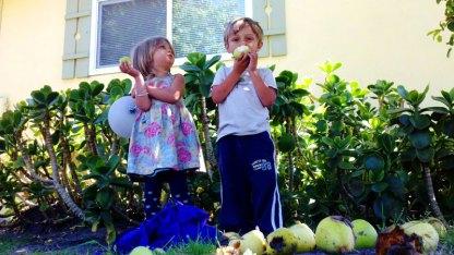 santa-cruz-fruit-tree-project_4_8-26-12